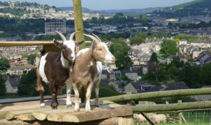Summer holidays in Bath: Bath city farm